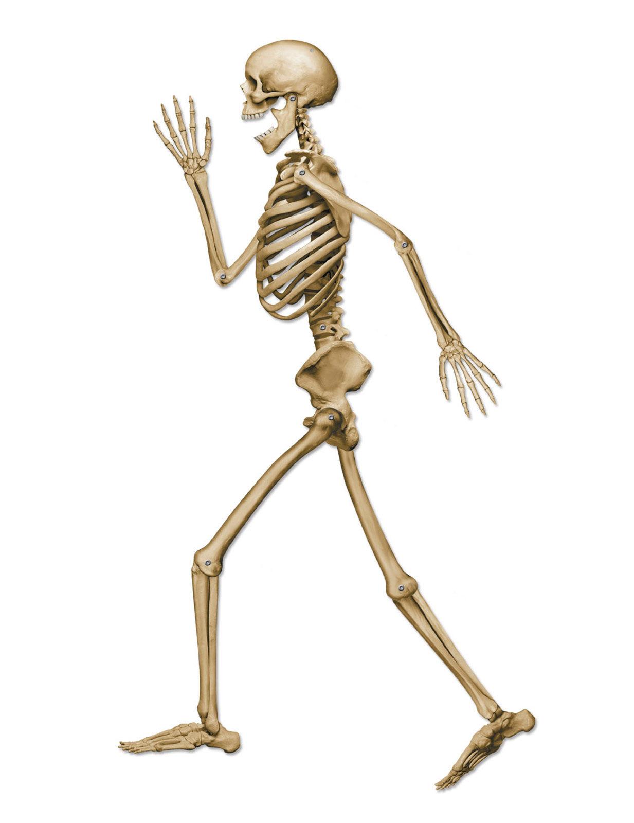 Skelett Dekoration Halloween 94 Cm Partydeko Und G 252 Nstige