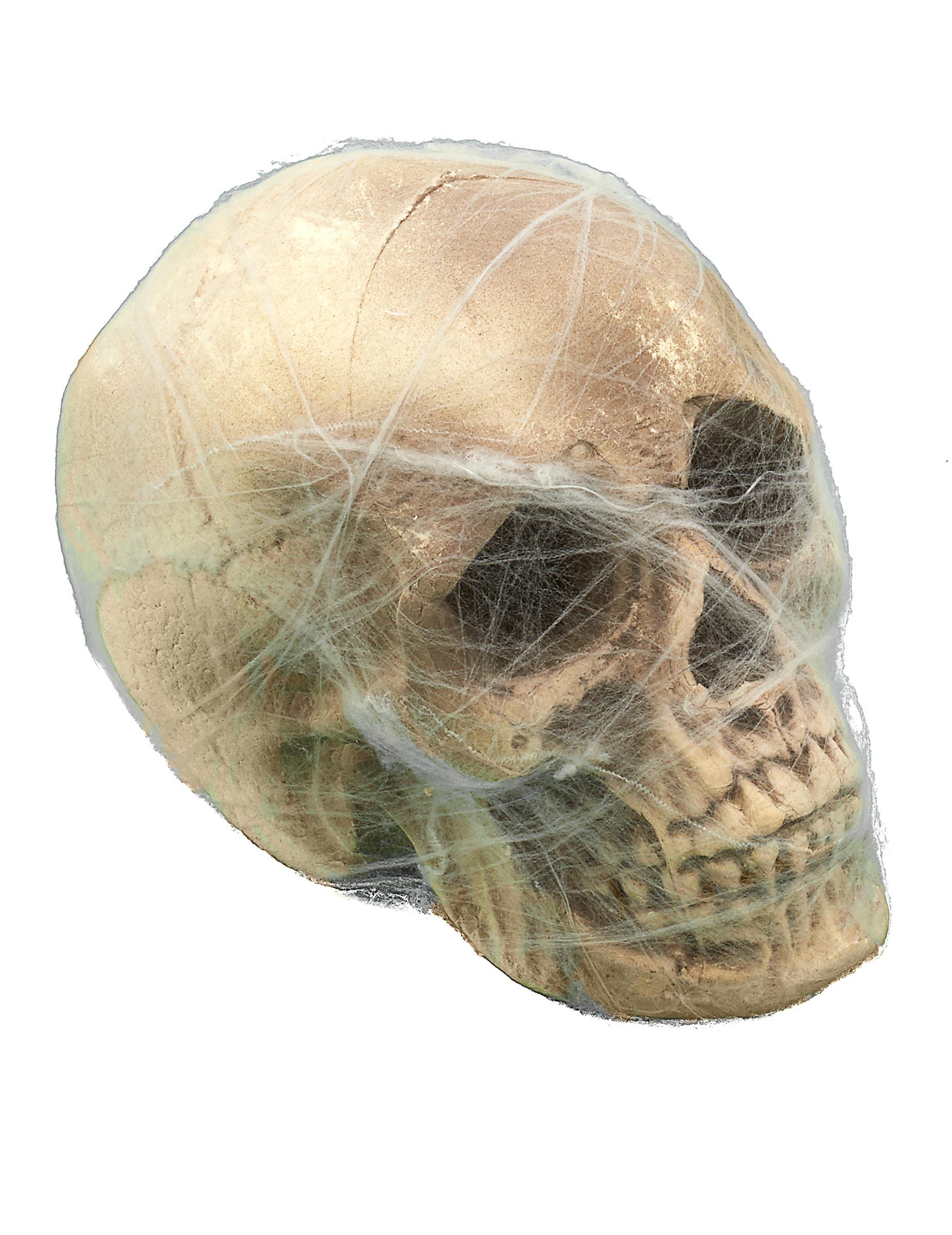 Berühmt Schädel Diagramm Anatomie Galerie - Menschliche Anatomie ...