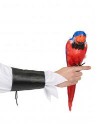Hawaï-Papagei