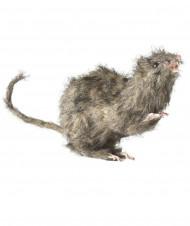 Halloween Ratte