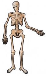 Skelett-Dekoration schwarz-weiss 1,4m