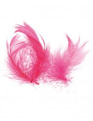 Federn pink