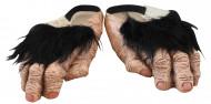 Schuhe Schimpanse Füssen für Erwachsene