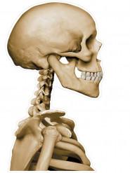 Skelett-Aufkleber für Autoscheiben