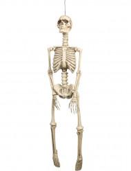 Skelett Dekorationen zum Aufhängen für Halloween