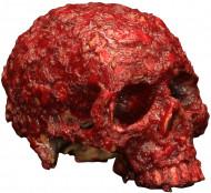 Verwesender blutiger Totenschädel