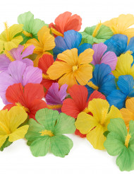 24 Hawaii Blumen