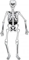 Halloween Skelett aus Karton 140 cm