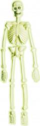 Phosphoreszierendes Labor Skelett - Halloween
