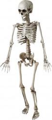 Hängendes Halloween Skelett, 120 cm