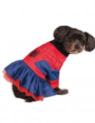 Spider Girl™ Kostüm für Hunde