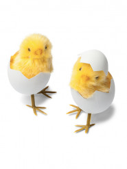 2 Schlüpfende Küken mit Ei Dekofiguren