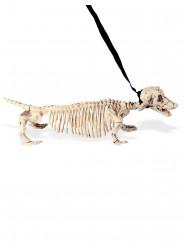 Hunde-Skelett an der Leine, 55 cm