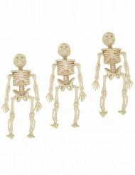 3 Skelette zum Aufhängen!