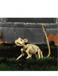 Dekoratives Skelett einer Ratte Halloween