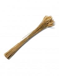 Weizen Strauß Partydekoration 25 Stück braun 60cm