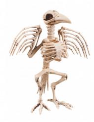 Skelett in Rabenform