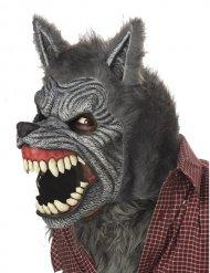 Animierte Werwolf-Maske für Erwachsene Kostüm-Accessoire grau