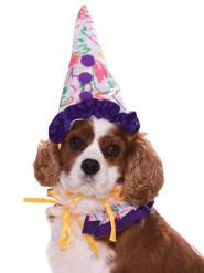 Clown-Kostüm für Hunde und Katzen