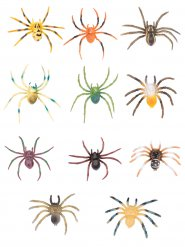 Spinne bunte Dekoration Halloween