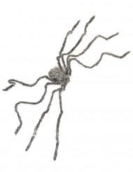 Graue haarige Spinne
