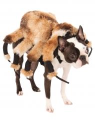 Riesen Spinnenkostüm für Hunde