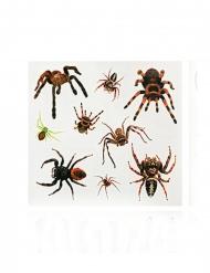Ekelhafte Spinnen-Tattoos Make-up Aufkleber für Halloween braun