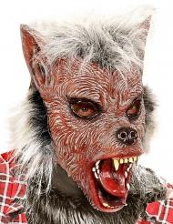 Werwolf-Maske für Kinder Halloween-Zubehör braun-grau