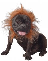 Löwenmähne für Hunde Faschingsaccessoire braun