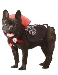 Vampir-Hundekostüm für Halloween Tier-Kostüm schwarz-rot-weiss