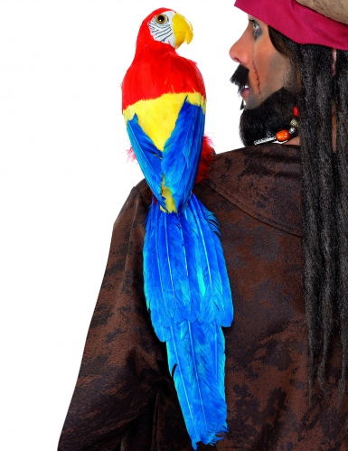 Papagei Pirat