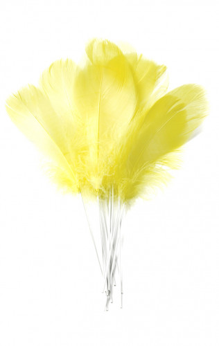 12 gelbe Federn auf Stift