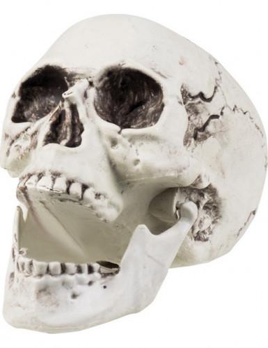 Dekoration Totenkopf 24 x 18 cm Halloween
