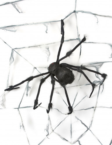 Riesiges Spinnennetz mit Spinne-1