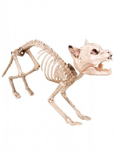 Dekoration Katzen-Skelett