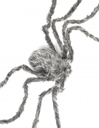 Graue haarige Spinne-1