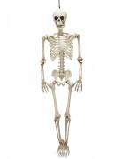 Bewegliches Halloween-Skelett 90 cm