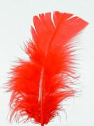 100er Set rote Federn